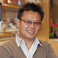 Engineered developmental signals could illuminate regenerative medicine