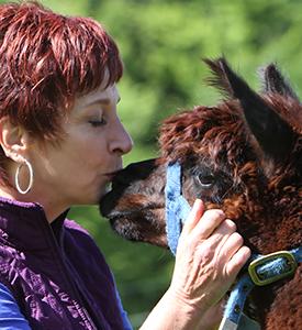 Animal Wisdom Support
