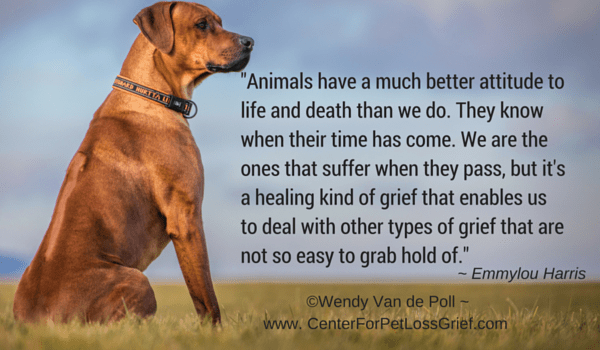 Loss Of A Pet Quote Impressive Pet Loss Quotes  Center For Pet Loss Grief