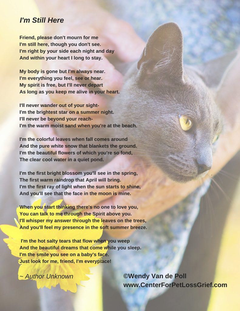 Pet Eulogy Poem