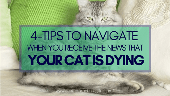 Navigate the news your cat is dying