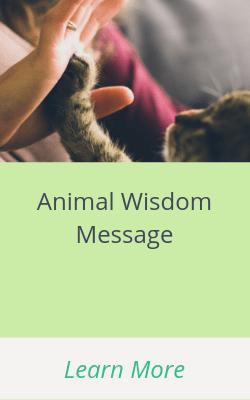 Animal Wisdom Message