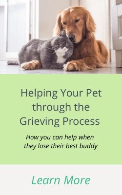 Workbok to help your pet through the grieving process after they lose their companion