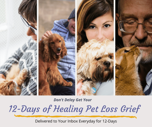12 Days of Healing Pet Loss Grief email support
