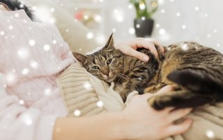 Kindness during pet loss grief for the holidays
