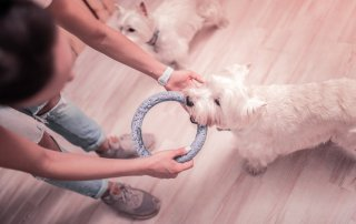 Sacred Objects for Pet Loss