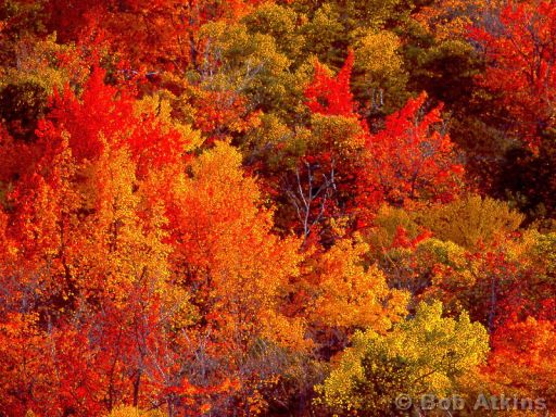 fall_foliage_TEMP0465