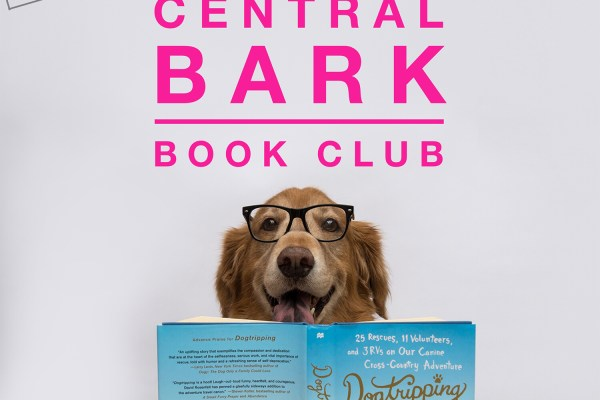 Central bark book club dog with book