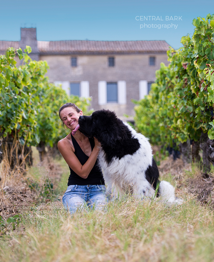 black and white newfoundland dog licking his human mom in a vineyard