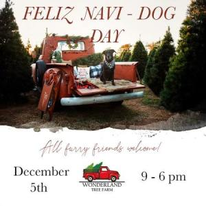 Dog in red truck at tree farm