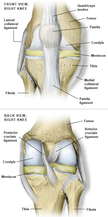 Rodilla-Anatomía