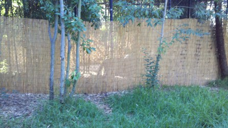 Shadow of a tiger behind the bamboo