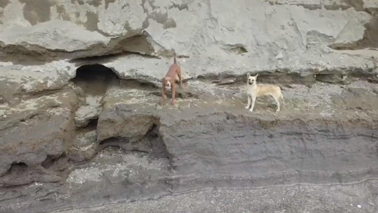 Quedan atrapados dos perritos en el socavón de Puebla, analizan si es  posible rescatarlos | Central de Noticias Mx