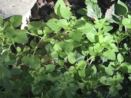 Wild Edible and Medicinal Plants