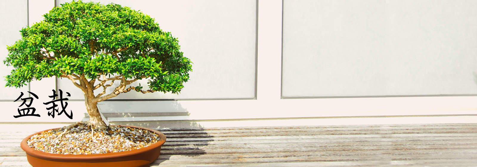 bonsai header