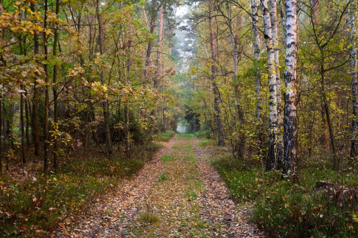 Beautiful path in forest in morning light,