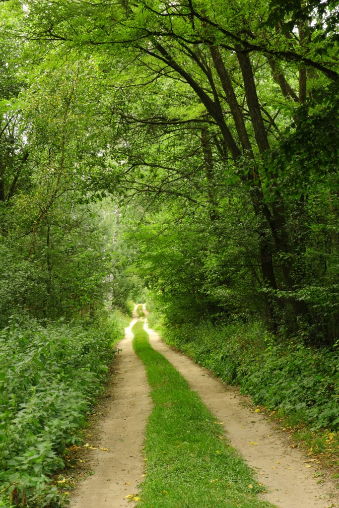 Path in the green forest in summer