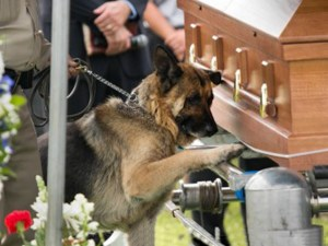 Working dog at the casket of his partner.