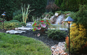 south tampa lawn care