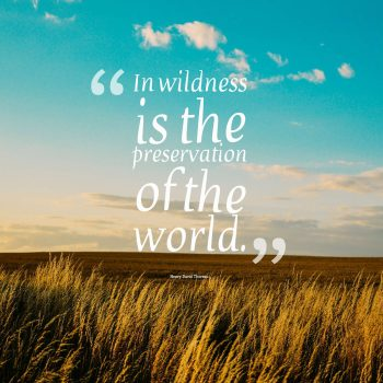 In wildness is the preservation of the world.