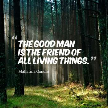 The good man is the friend of all living things.
