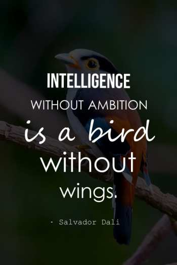 Intelligence without ambition is a bird without wings.