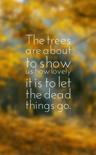 The trees are about to show us how lovely it is to let the dead things go.