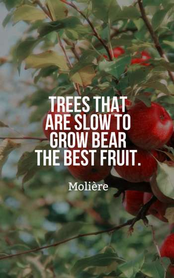 Trees that are slow to grow bear the best fruit.
