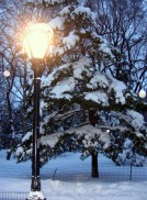 Narnia in Central Park