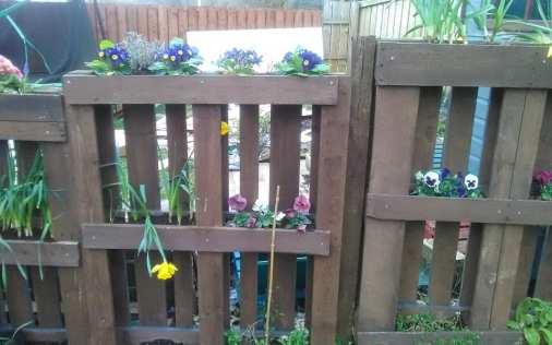 Audrey Dryburgh - Spring Sunshine (Garden) 2
