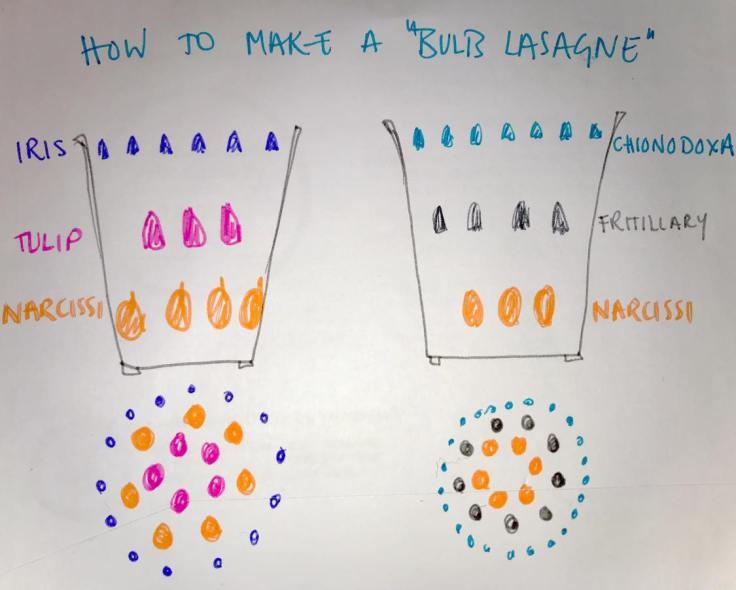 Bee Hayes - Bulb Lasagne Experiment Preparation Sketch