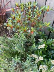 Kelly Hussain - Outdoor Plants 3