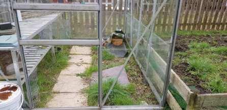 Phurpha Tsumu Lama Dhangsong - Garden Greenhouse