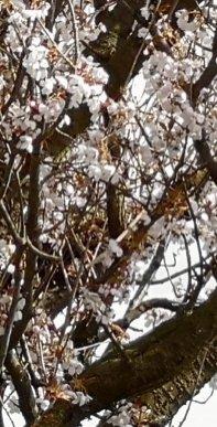 Ray Kelly - Garden Tree