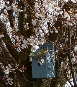 Ray Kelly - Tree and Birdbox