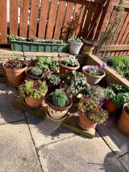 Rohini Sharma Joshi - Outdoor Plants