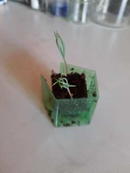 Wendy Watson - Bonsai Plant