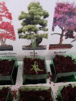 Wendy Watson - Bonsai Plants