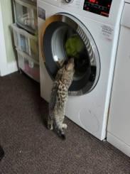 Judith Allison - Kitten Image 1