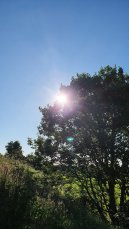 Lyn MB Stewart - Sun in the park 2