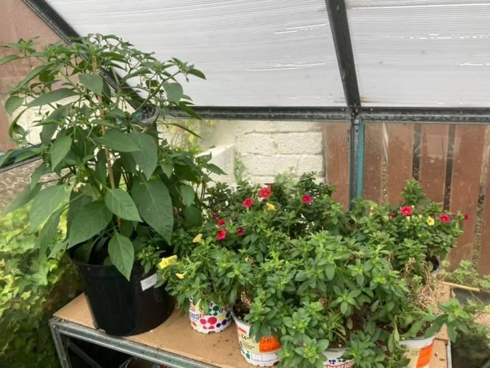 Coryn Barclay - Greenhouse Plants 2