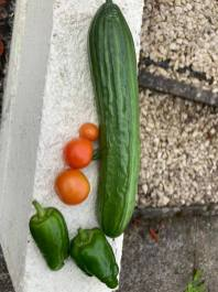 Coryn Barclay - Grown Vegetables
