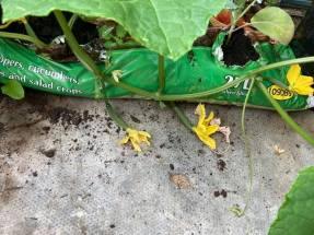 Coryn Barclay - Vegetable Plant