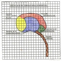 cerveau c