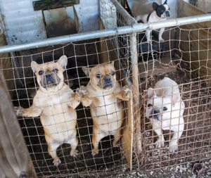 north-carolina-puppy-mill-raid