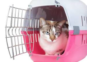 chaton-dans-cage-rose