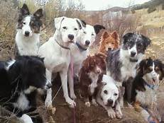 groupe-chien2
