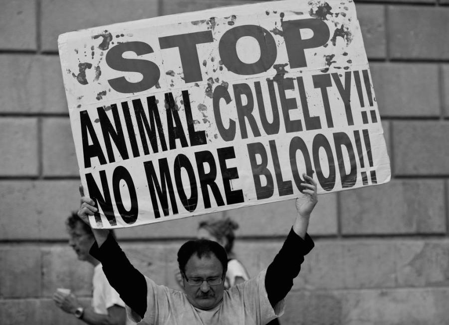 Animal+Cruelty