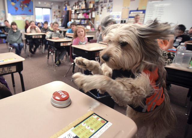 Therapy Dogs at School