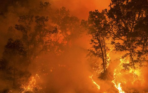 Ongoing Forest Fire Sparked by Gender Reveal